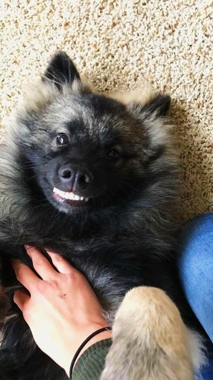 This dog who can't contain his excitement.