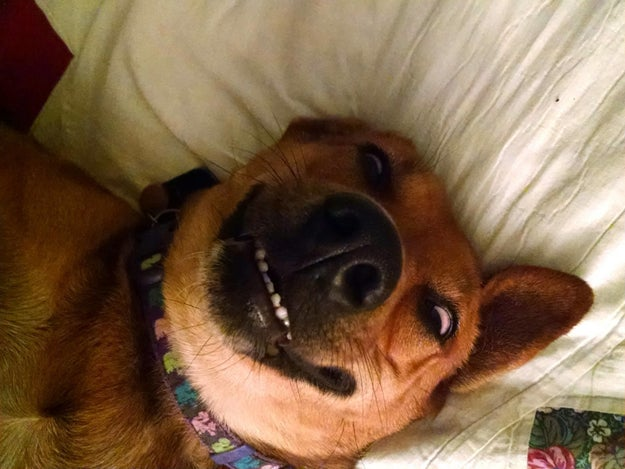 And finally, this dog who is exceptionally happy to be sleeping on the bed.