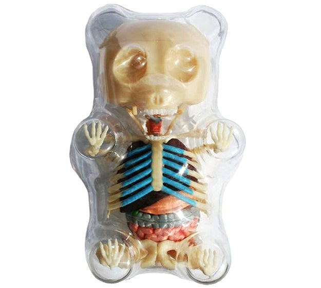 A Gummy Bear anatomy puzzle, or: a Gummy Bear-shaped torture chamber filled with the small animal that died trying to escape it.