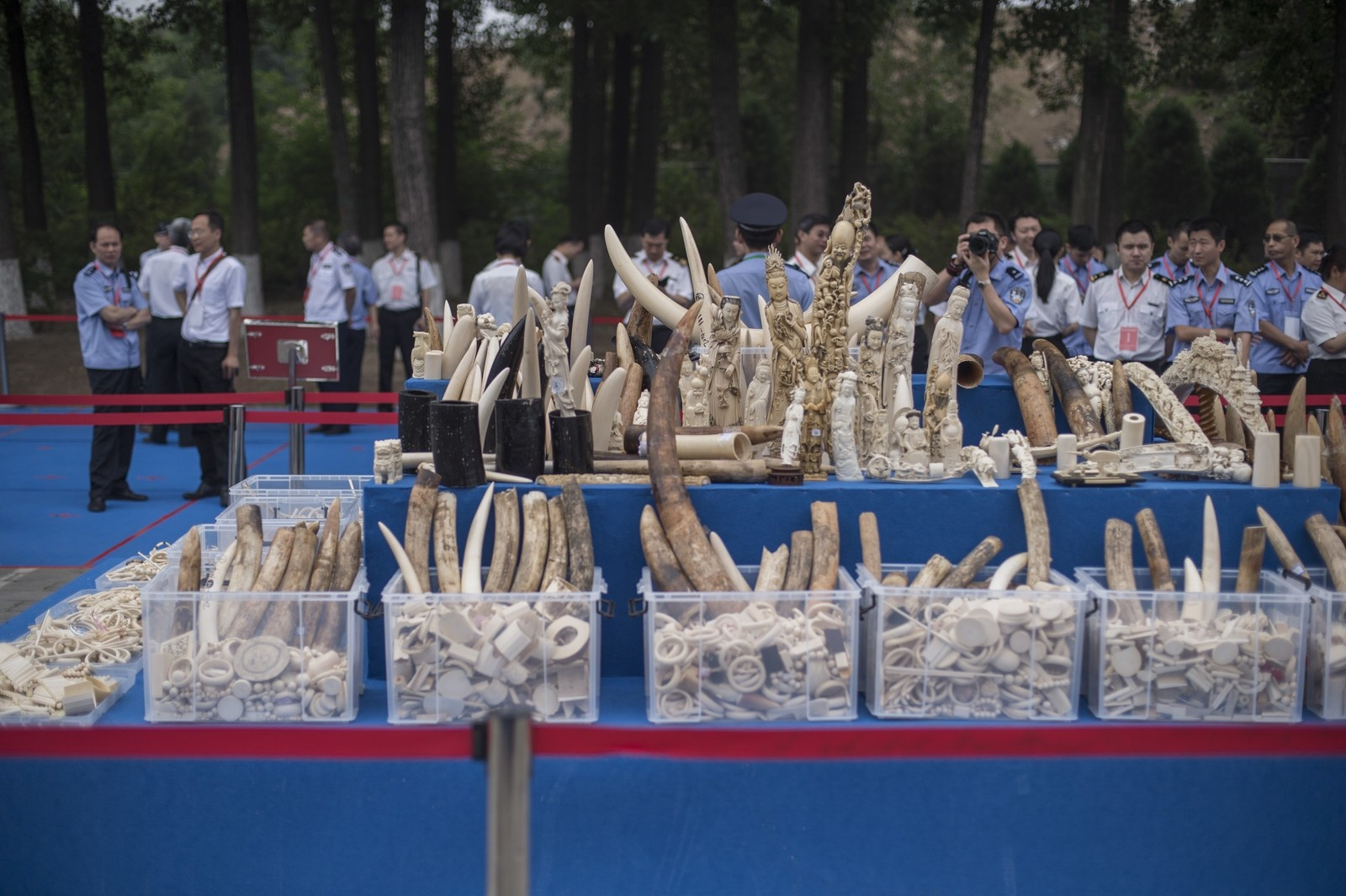 Elephants Just Became Safer Because China Is Banning The Sale Of Ivory