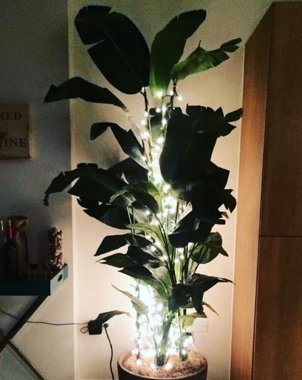 ¿Por qué no puede ser cualquier planta?