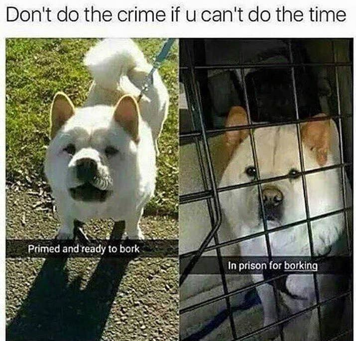 Pictures Thatll Make You Pee Yourself Laughing - 32 hilarious tumblr posts about animals that will make your day so much better