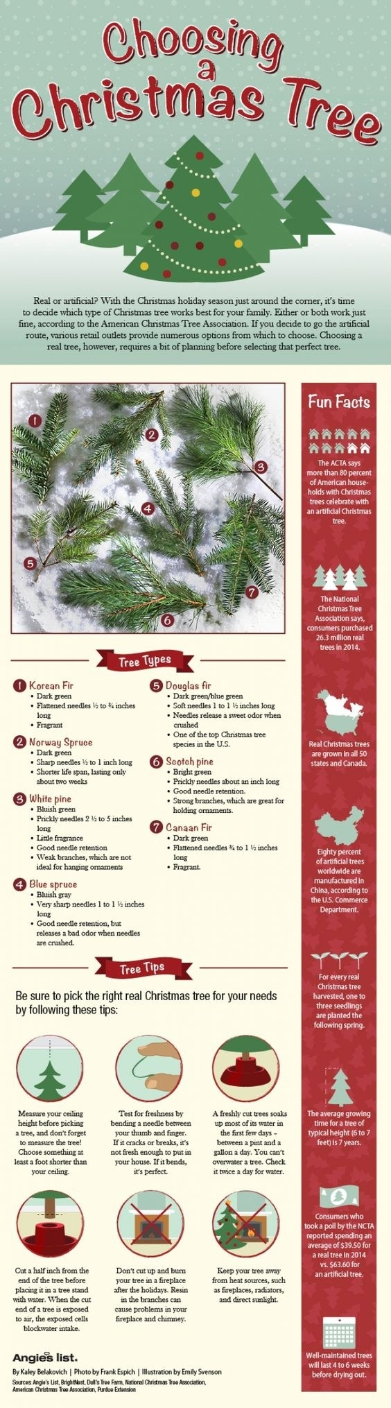 First things first, make sure you pick the right tree for your house.