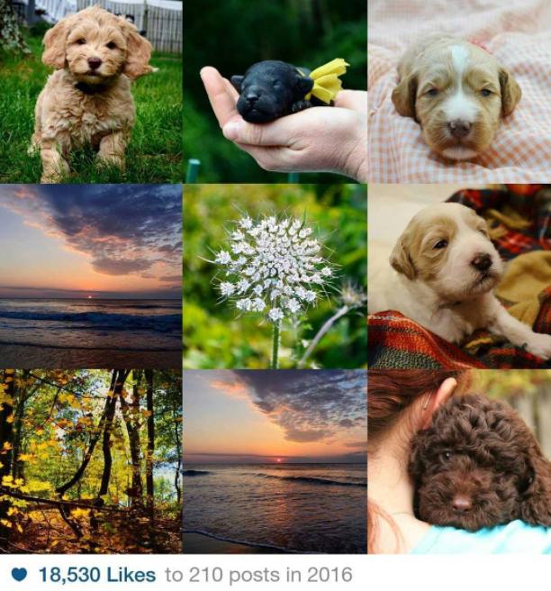Si tienes una cuenta de Instagram, seguramente has empezado a notar la presencia de collages con las mejores fotos del año.