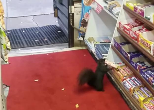 Chocolate-stealing squirrels.