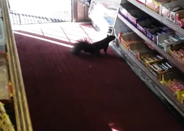 Her dad estimates they've lost at least 40 chocolate bars to squirrels over the years.