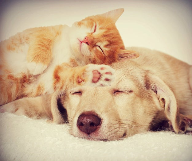 Hi. Please look at these adorable animals napping together. Now, don't you need this kind of quality cuteness delivered directly to your inbox this year? Of course you do!