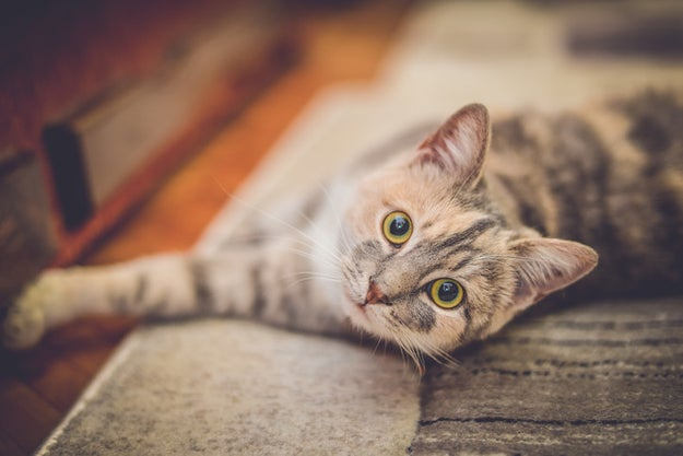 """For cat lovers, we've got our """"This Week in Cats"""" newsletter. Every Friday, you'll get the most adorable pictures and stories from Cat Country."""
