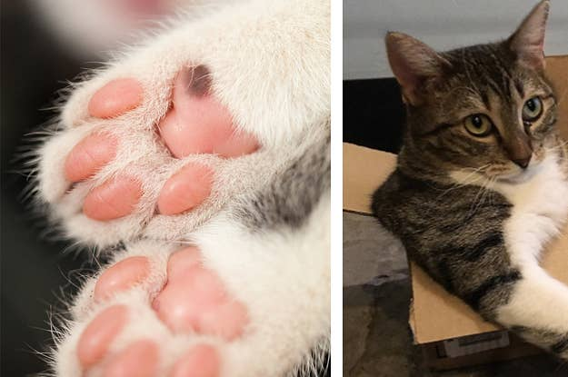 19 Problems You'll Only Understand If Your Cat Is An Angel