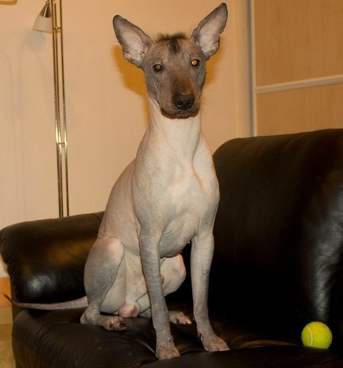 Here Are 16 Hairless Animals In Case You Were Curious
