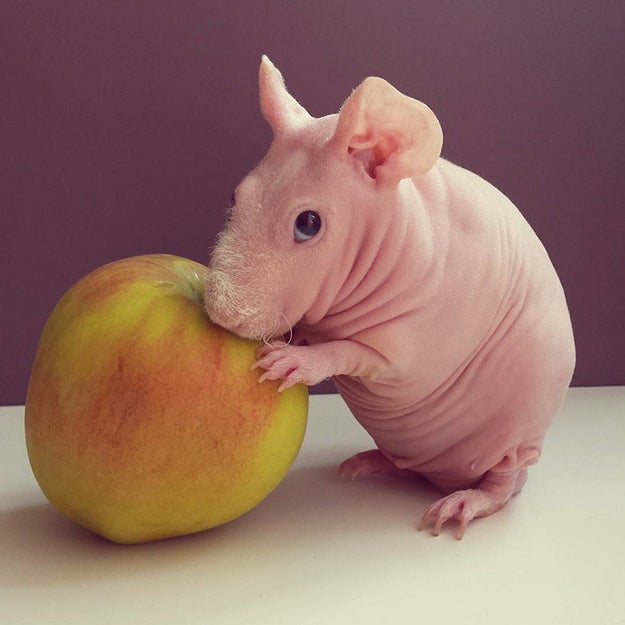 Here Are 16 Hairless Animals, In Case You Were Curious