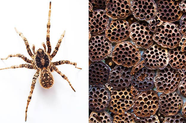 These 22 Photos Will Help You Figure Out If You Have Trypophobia