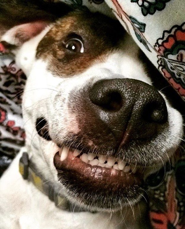 28 Proud Staffie Owners Show Off Their Awesome Doggos