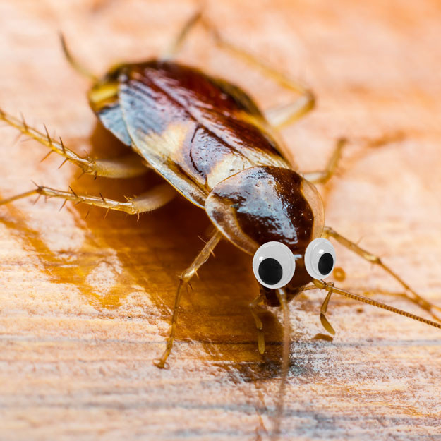This googly-eyed cockroach is one you'd probably welcome into your home.