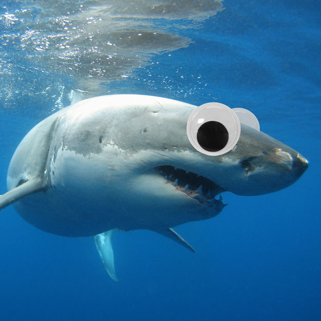 "This dangerous great white shark is swimming up to you just to say, ""hi"" with googly eyes on."