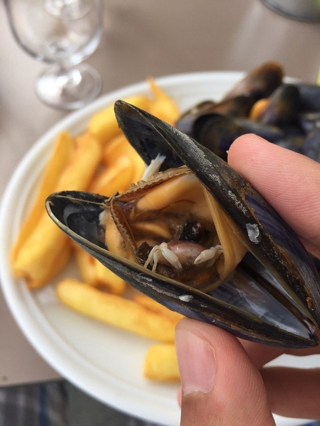 This crab trapped inside a mussel: