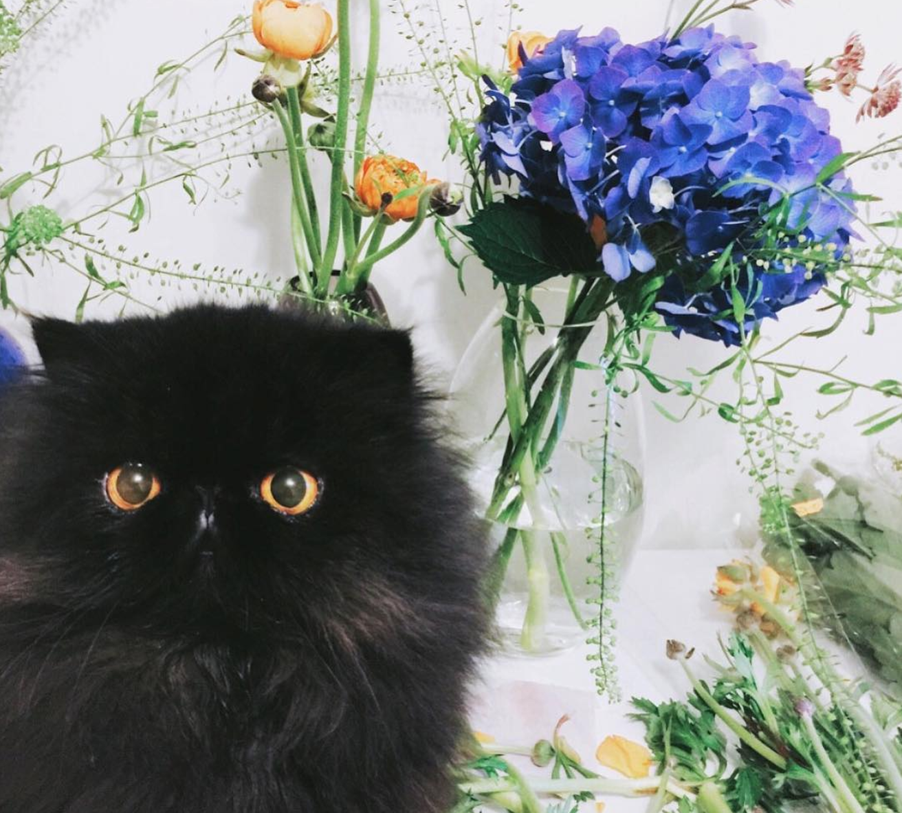 Let's Face It, You Just Can't Get A Black Cat