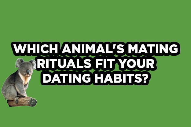 Dating your vet