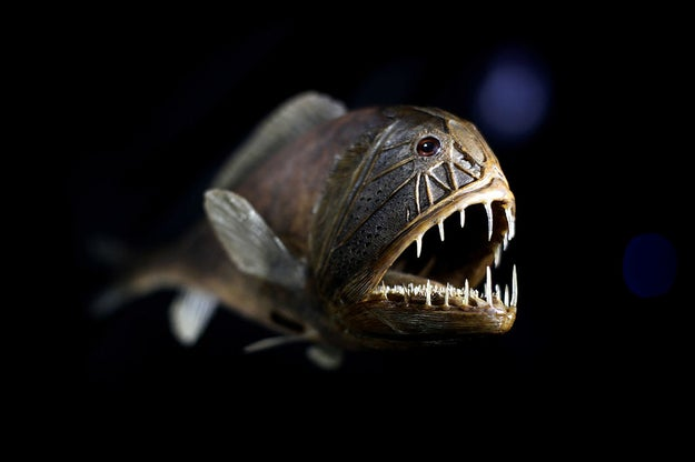 A lot of deep-sea fish have both male and female sex organs. And some of them even have the ability to change their sex organs during their lifetimes.