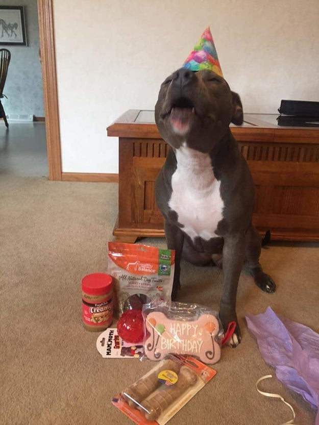And this cutie who is celebrating another year of contributing to the community of good boys.