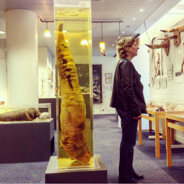 Iceland is home to a penis museum — The Icelandic Phallological Museum.