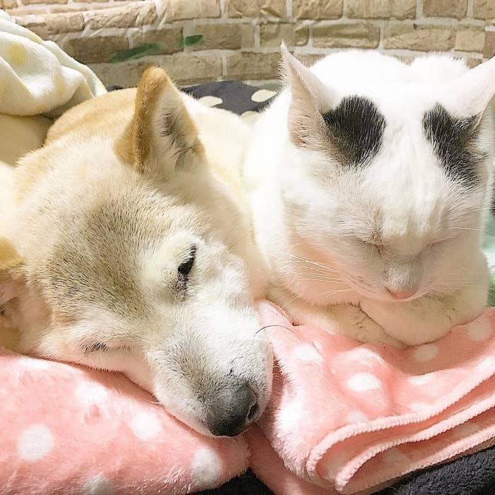 その名も「ひだまり日和」。2匹のラブラブっぷりに癒される人たちが続出です。