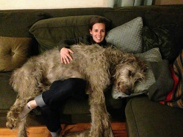 Does your giant dog literally take up your whole couch?