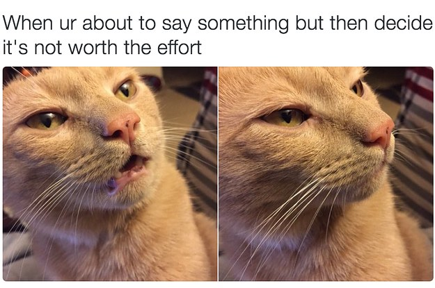 Cat Memes: 18 Times Cats Were Actually Relatable AF