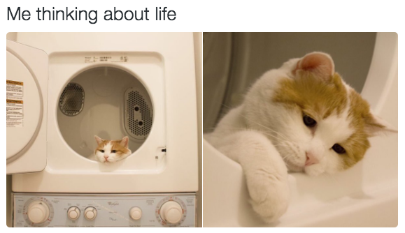 This existential crisis: