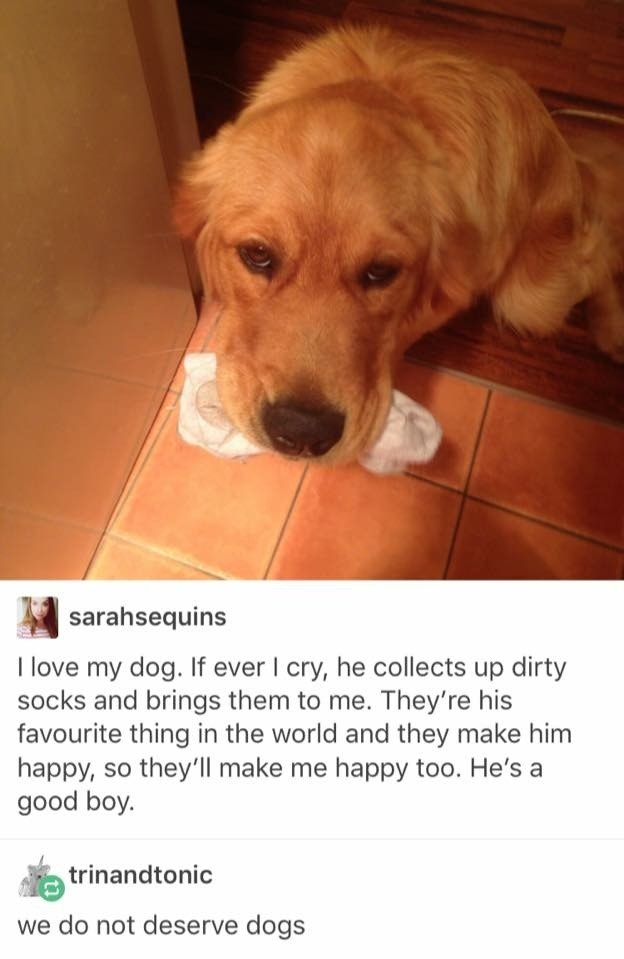17 Dogs Who Deserve To Be Pet All They Want, Dammit