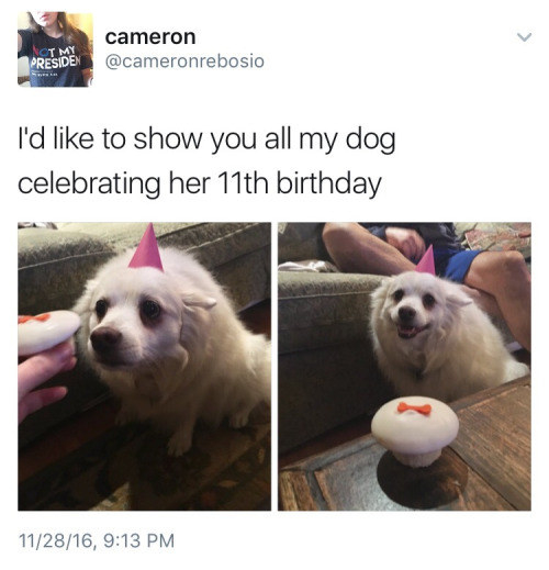 This happy 11-year-old doggy: