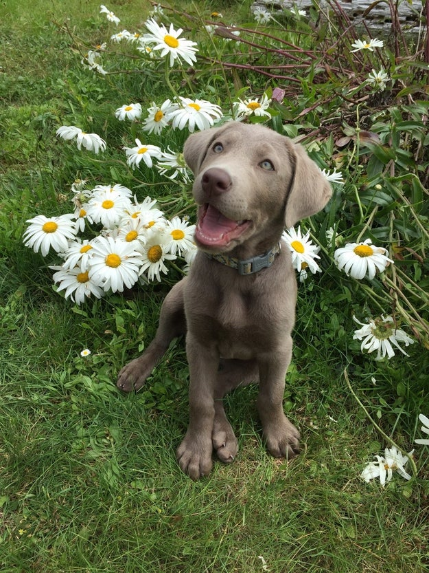 And this puppy who is a pure ray of sunshine.
