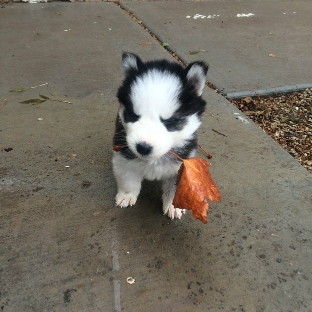 This flooferton who just wanted to bring you a large leaf to show his appreciation.