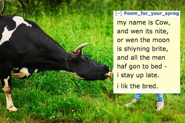 my name rach i like to rite 2 15986 1485269093 3_dblbig someone wrote a poem about a cow and now everyone is doing it