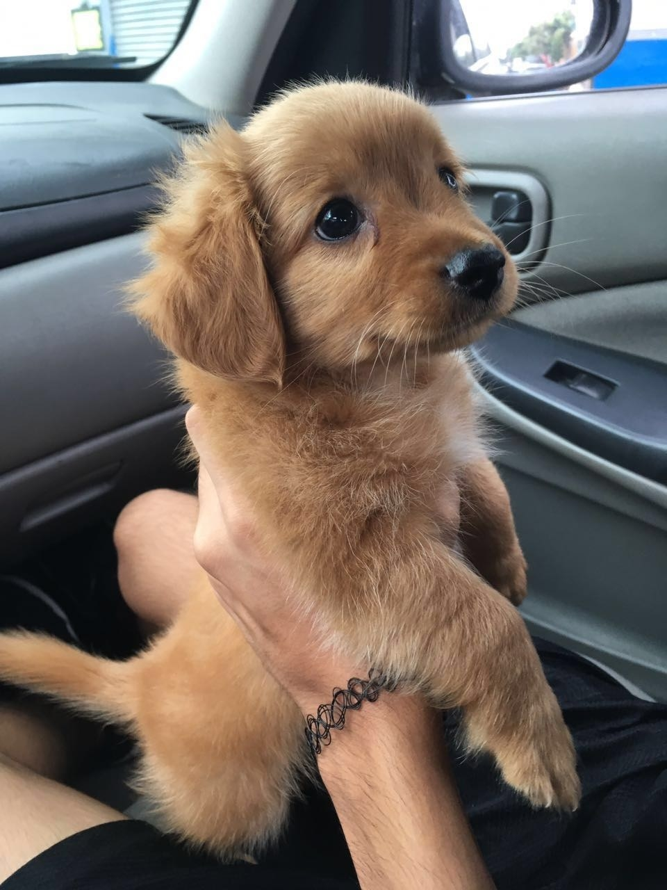 29 Puppies Who Are Far Too Cute For This World