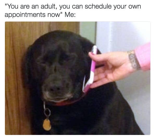 Hilarious adulting memes for anyone who is entering adulthood or tired of grown-up responsibilities (фото 3)