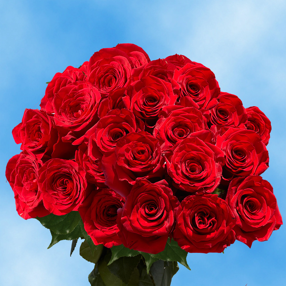A bouquet of 100 red roses