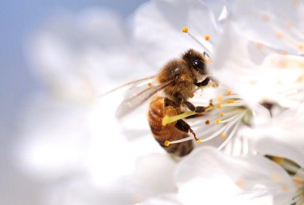 Buzzfeed Dog Bee Bites