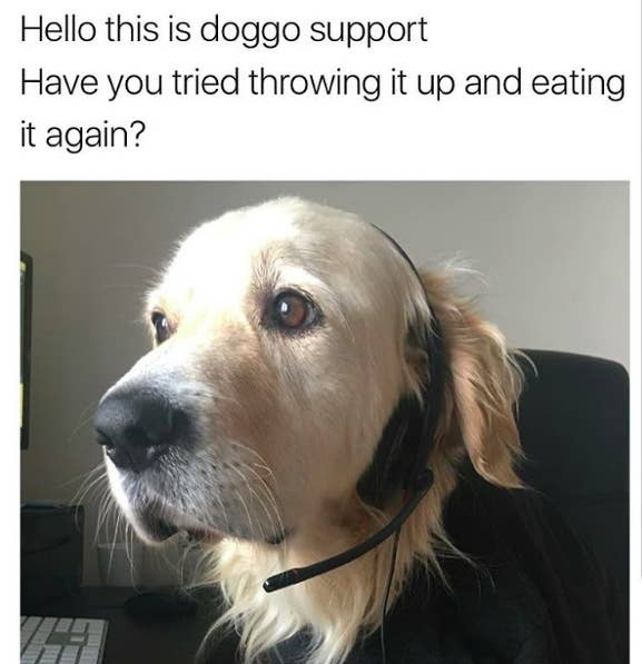 hello this is dog. this helpline: hello is dog 9