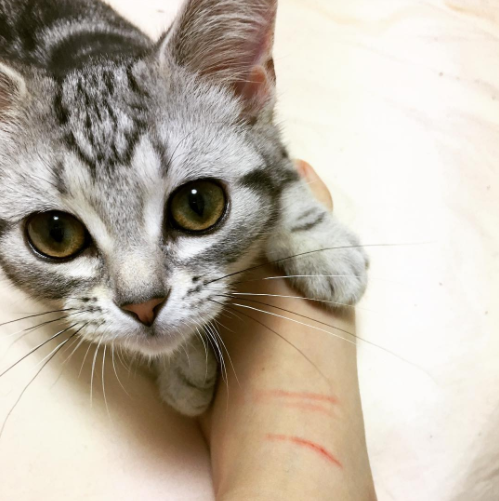 A scratch is a tender demonstration of love.