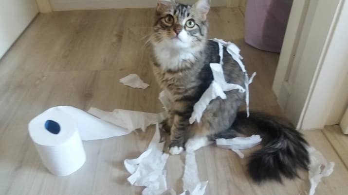 The game consists of shredding it entirely to bits and pieces and dragging it all around the house. The end.