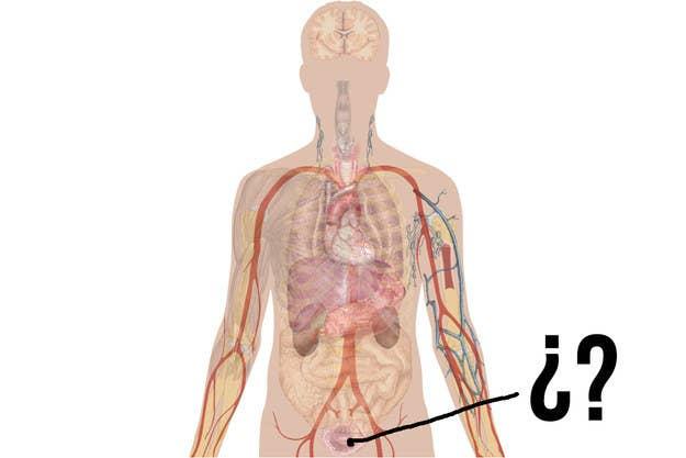 Si no sacas 10 en este examen de Anatomía, no deberías tener cuerpo