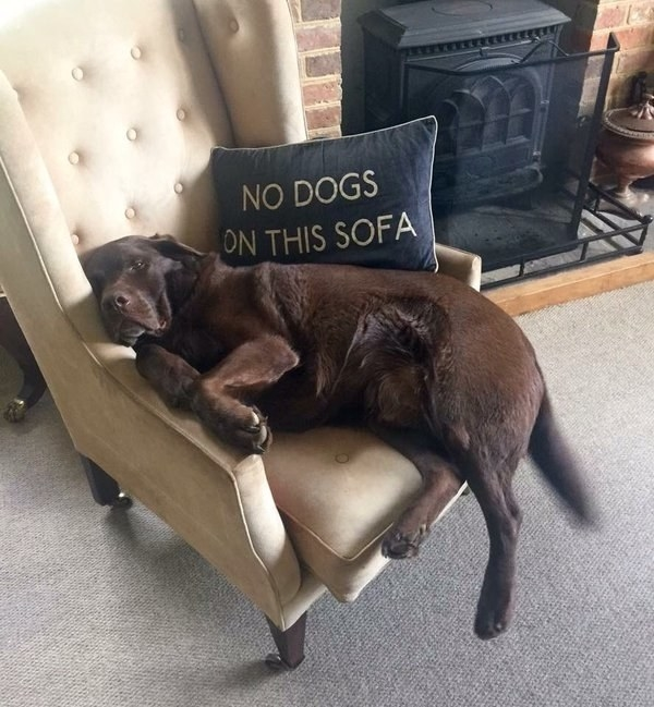 And they didn't fit on the sofa or chairs any more.