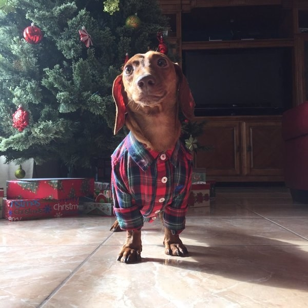 A weenie that knows how to dress.