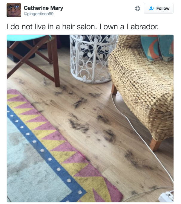 Your home is covered in Labrador hair.