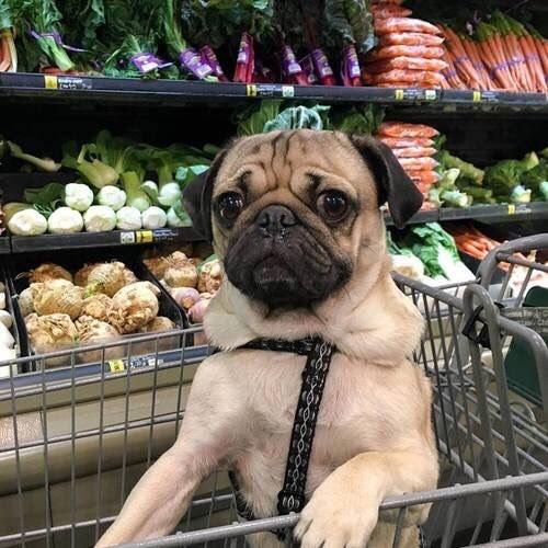 """Quando você pedia alguma coisa gostosa, sempre ouvia """"Eu compro e depois vocês deixam estragar tudo!""""."""