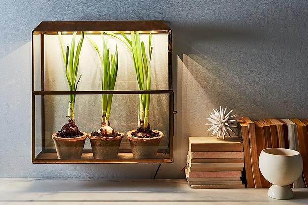 13 Ways To Not Kill Your Indoor Plants
