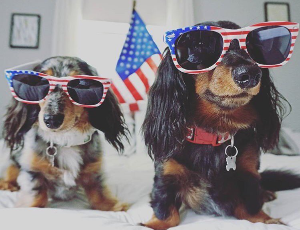 Maybe you get butterflies when you see a patriotic wiener.