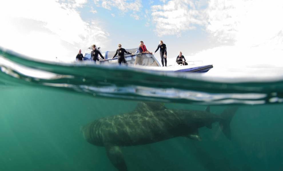 Get up close and personal with basking sharks in the Hebrides.