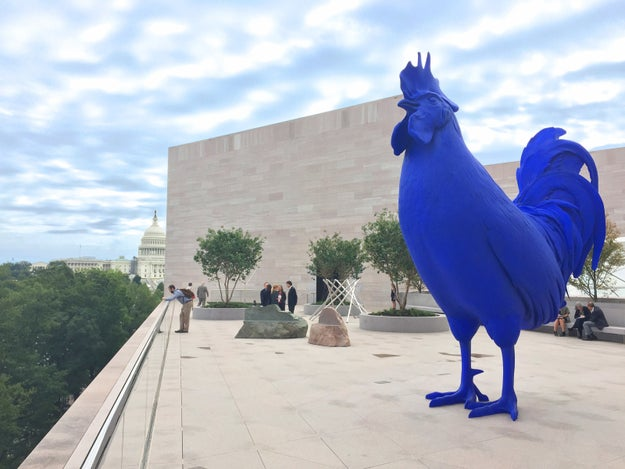 "Say, ""You're my boy, Blue!"" to the electric blue rooster sculpture on the rooftop of the National Gallery of Art East Building."